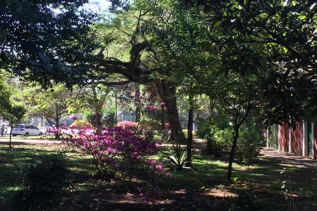 Jardim Paulista: oásis de paz Flores e Pássaros