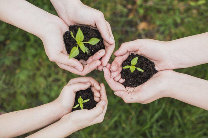 Sustentabilidade: mãos segurando pequenas plantas