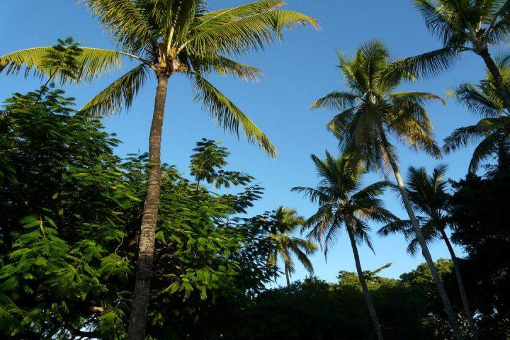 Pacata Trancoso: conjunto de palmeiras e dia ensolarado