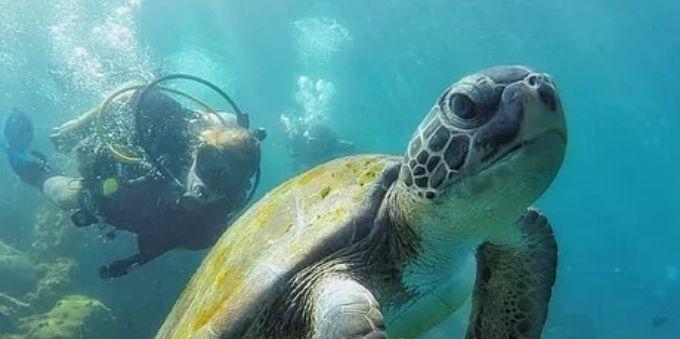 Angra dos Reis: imagem do fundo do mar mostra tartaruga no centro da foto, e mergulhador ao fundo