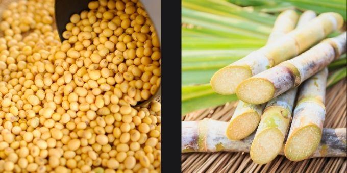 Interior de São Paulo. Duas imagens lado a lado. A imagem da esquerda mostra grãos de soja. A imagem da direita mostra cana de açúcar