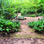 Lugares no Morumbi: imagem mostra parque Alfredo Voip, com um banco centralizado e árvores ao redor