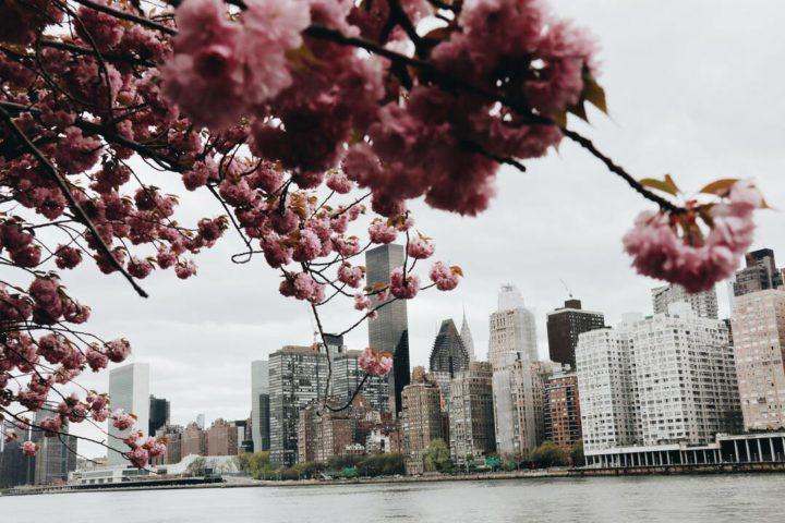 Lugares diferentes em Nova York: imagem mostra vista para prédios na cidade, com foco em flores a frente